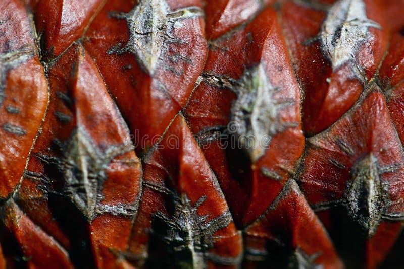 Pinecone bakgrund royaltyfria foton