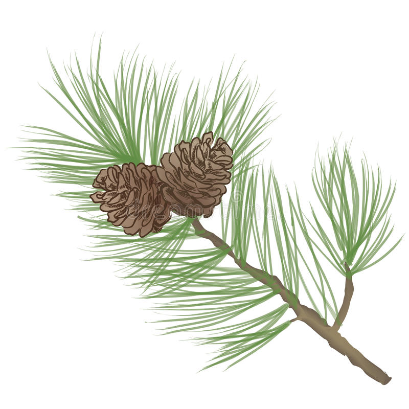Pinecone Branch Collection Stock Illustration Illustration Of