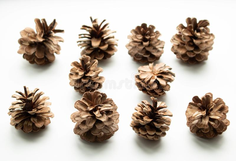 The lump in the winter. Pinecone with Christmas tree and pine royalty free stock photos
