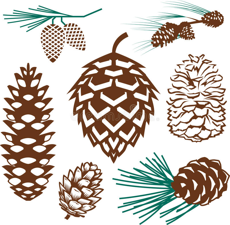 Free Pinecone Collection Royalty Free Stock Photography - 23156897