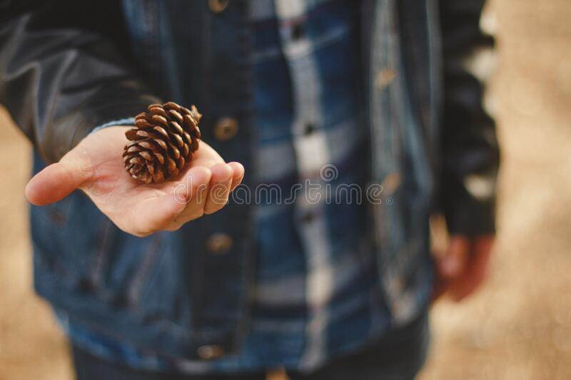 Pinecone In Hand Free Public Domain Cc0 Image