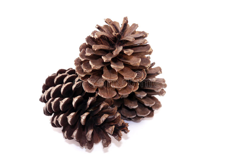 Pinecone. Isolated on white background stock photos
