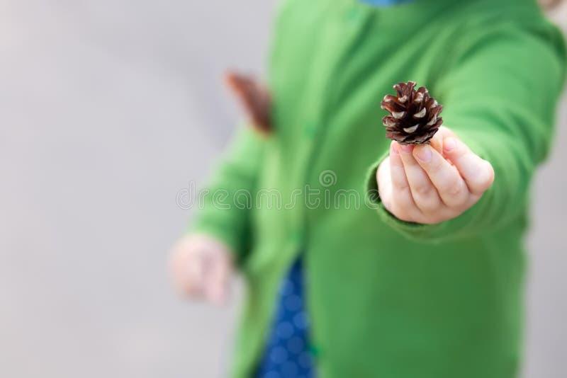 Pinecone na mão da criança Fim acima Conceito de exploração da natureza fotos de stock royalty free