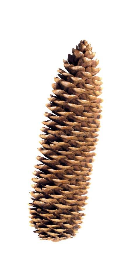 Pinecone op een witte achtergrond stock foto's