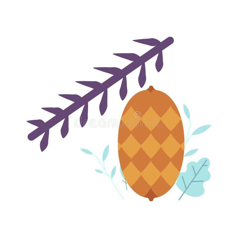 Pinecone op sparren, pijnboom of sparrentakvector royalty-vrije illustratie