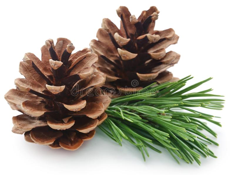 Pinecone. Isolated over white background stock photo