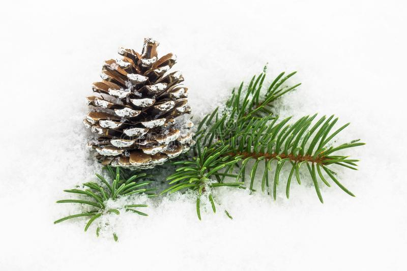 Pinecone In The Snow. Christmas decoration in winter stock images