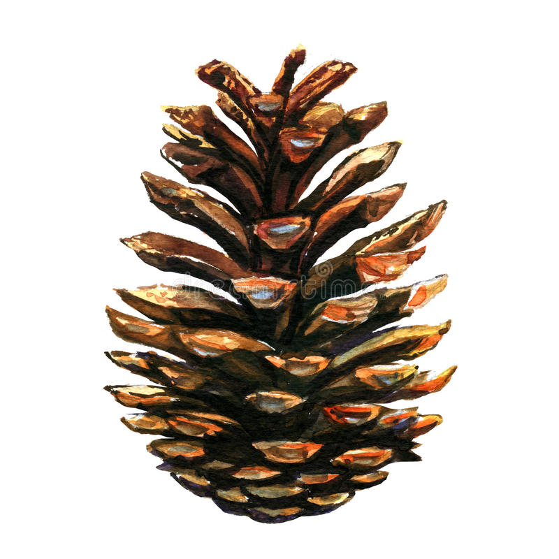 Pinecone sur le fond blanc illustration de vecteur