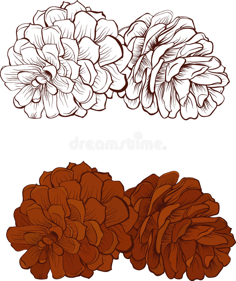 Free Pinecone Vector Illustration Isolated Stock Image - 80417481
