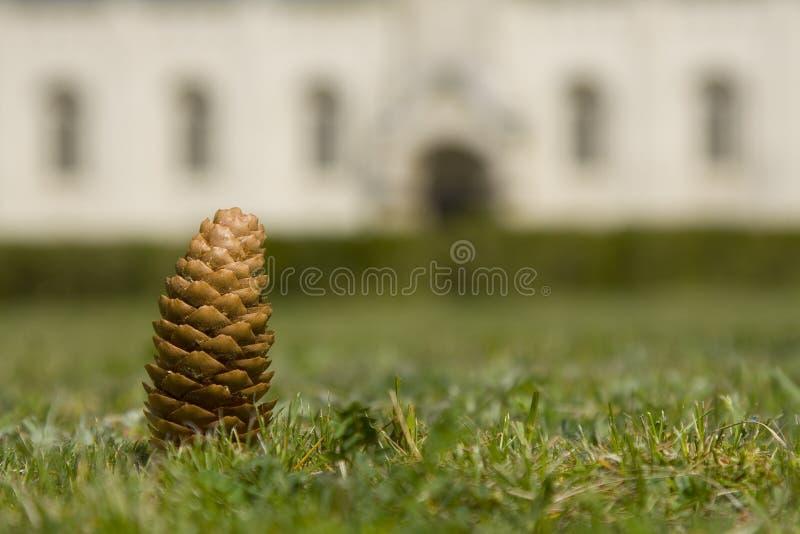 Pinecone w trawie zdjęcie stock