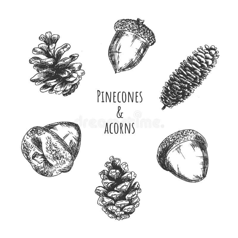 Pinecones и плоды леса жолудей иллюстрация штока