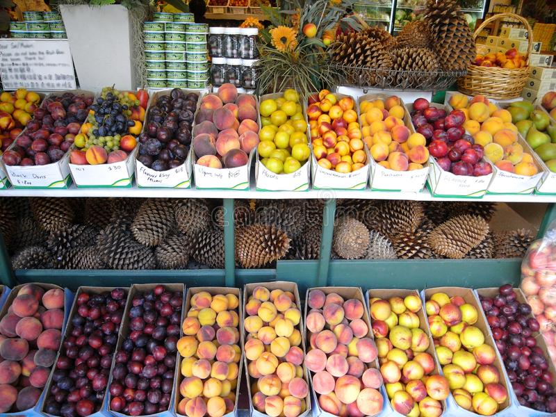 Pinecones extremadamente grandes vendidos en una tienda de la fruta en Nueva Zelanda foto de archivo