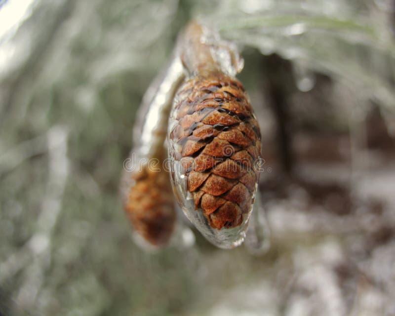Pinecones in Ijs royalty-vrije stock afbeelding