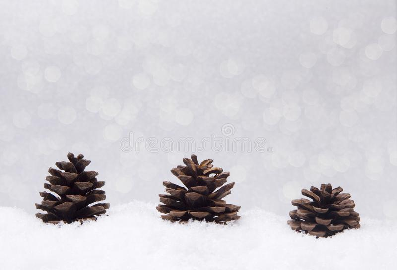 Pinecones that look like Christmas trees royalty free stock photo
