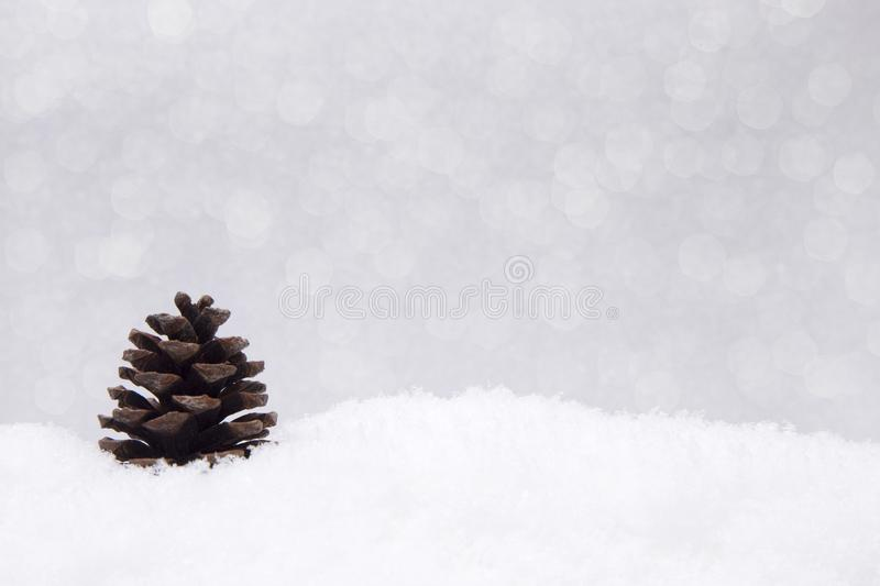 Pinecones that look like Christmas trees stock image