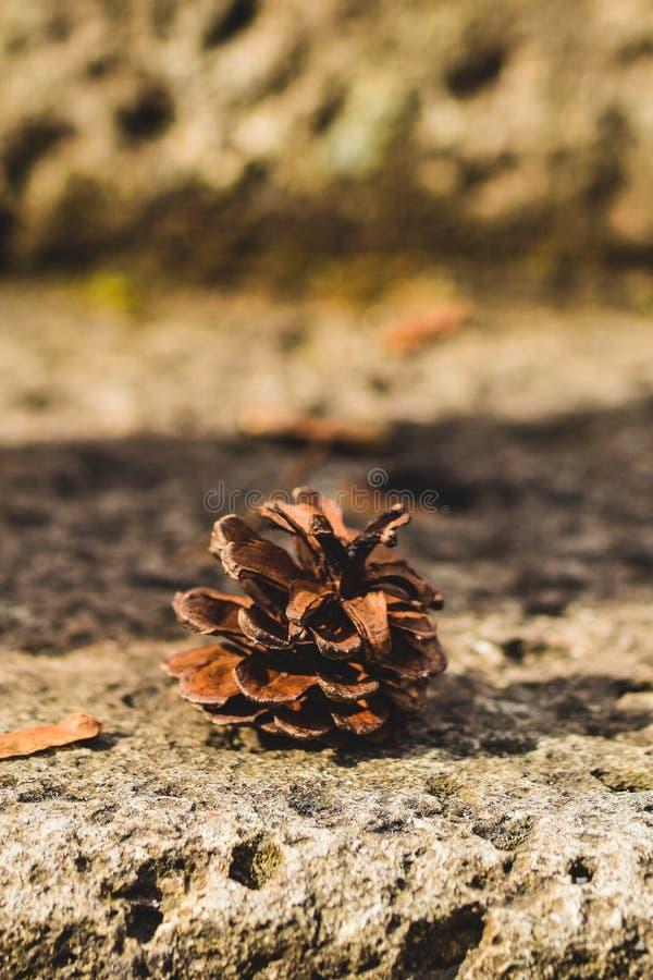 Pineconestap, Nikko Japan stock fotografie