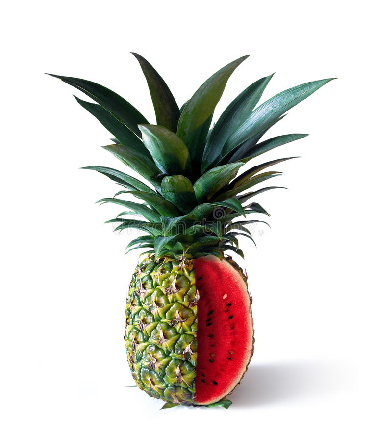 Download Pinemelon 2 stock image. Image of combination, display - 13065573
