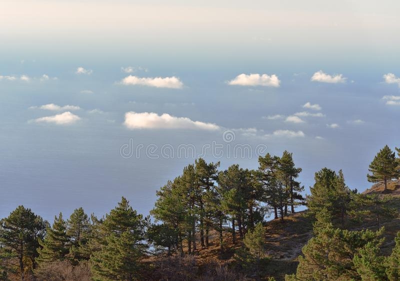 Pines above the floating clouds stock photo
