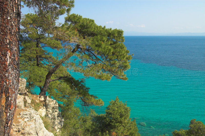 Pines above the sea royalty free stock photos