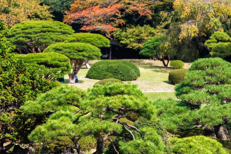 Pines in the autumn park Shinjuku, Tokyo, Japan. stock images