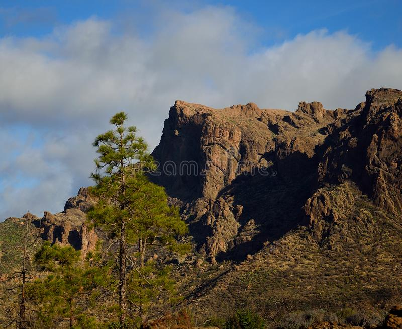 Pines and cliffs, La Plata, Gran Canaria. Pine trees and cliffs, La Plata, mountains of Gran Canaria, Canary Islands royalty free stock photos