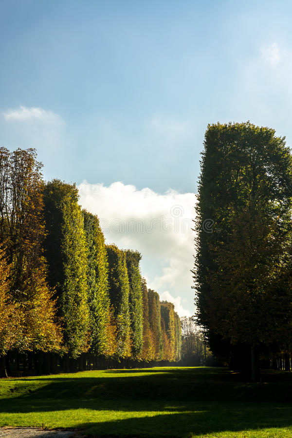 Download Pines And Cypresses Lining A Landscaped Promenade Stock Photo - Image: 83708415