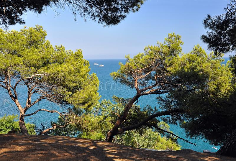 Pines grow on the shores of the blue sea on the background of the sky and the sea, on which the two ships sail. Crimea. Ukraine royalty free stock photo
