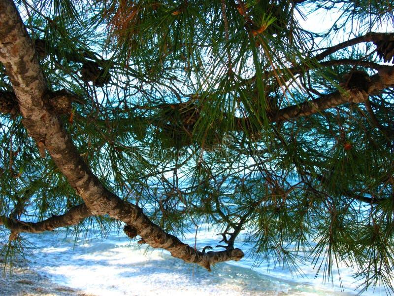 Pines and the sea. Adriatic Sea. Croatia. royalty free stock photos