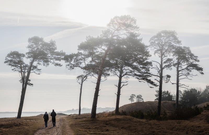 Pines at sea stock photo