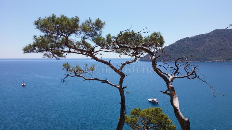 Pines trees at the sea laguna background. Adrasan Beach Turkey summer time royalty free stock images