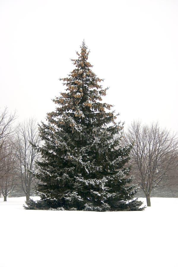 pinetree снежное стоковое фото
