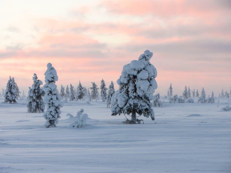 Pinetree d'hiver images libres de droits