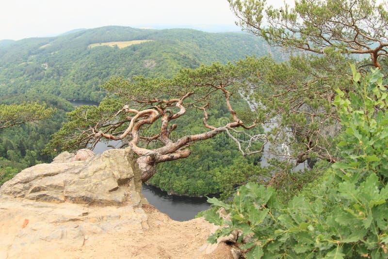 Pinetree en la opinión sobre el río Moldava - el comandante de Vyhlidka fotografía de archivo libre de regalías