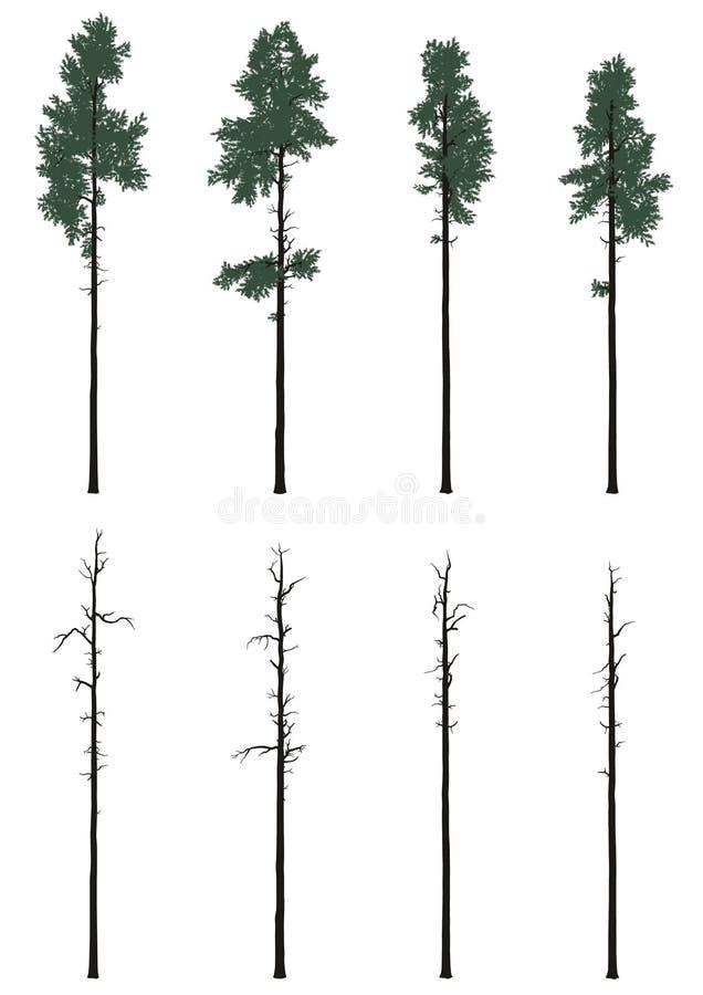 Pinetrees集合 免版税图库摄影