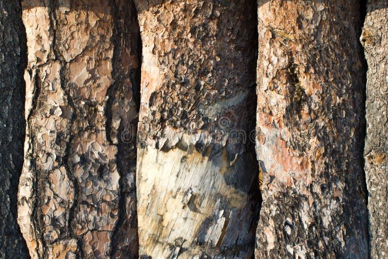 Pinewood σανίδες στοκ φωτογραφίες με δικαίωμα ελεύθερης χρήσης