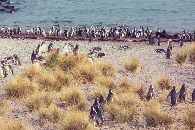 Download Pingüino foto de archivo. Imagen de cubo, outdoor, pingüino - 64207302