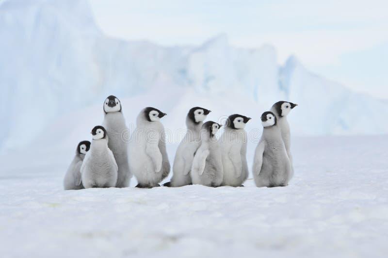 Pingüino de emperador