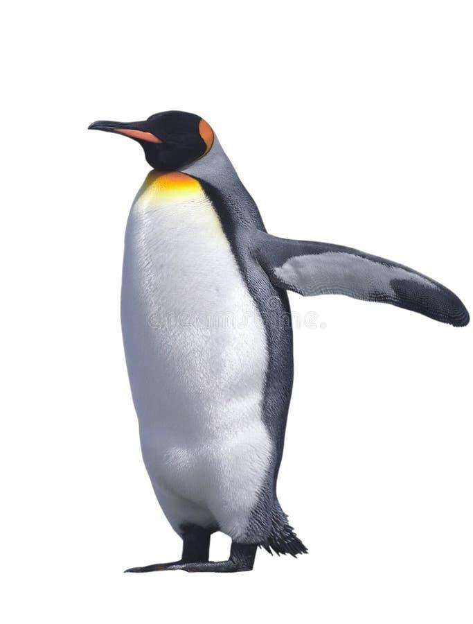 Pingüino de emperador aislado imágenes de archivo libres de regalías