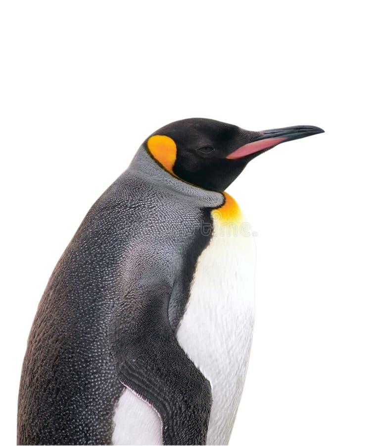 Pingüino de emperador aislado con el camino de recortes foto de archivo