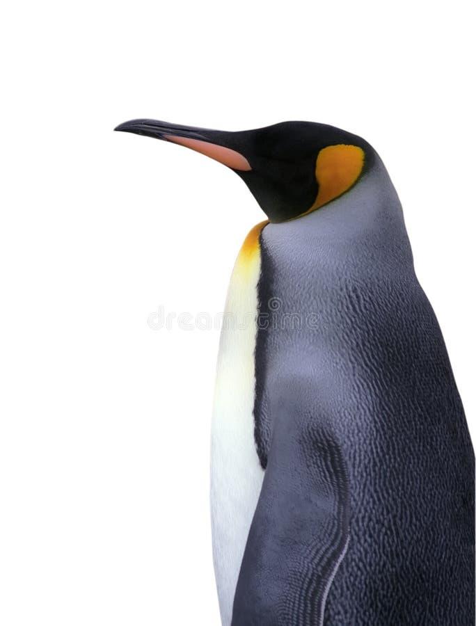 Pingüino de emperador aislado con el camino de recortes fotografía de archivo libre de regalías