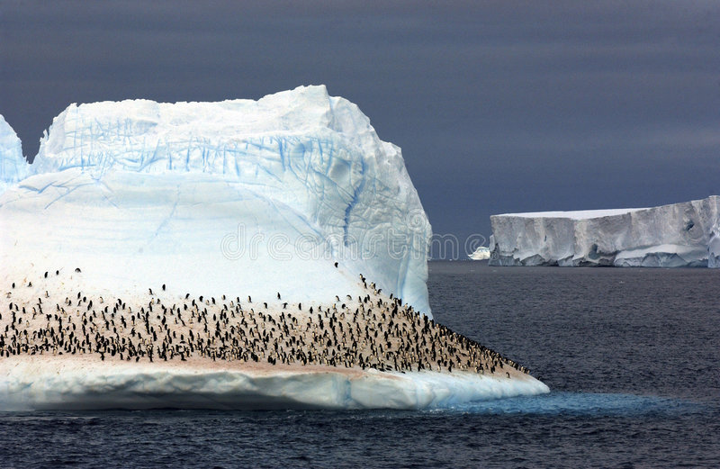 Pingüino de rey fotos de archivo