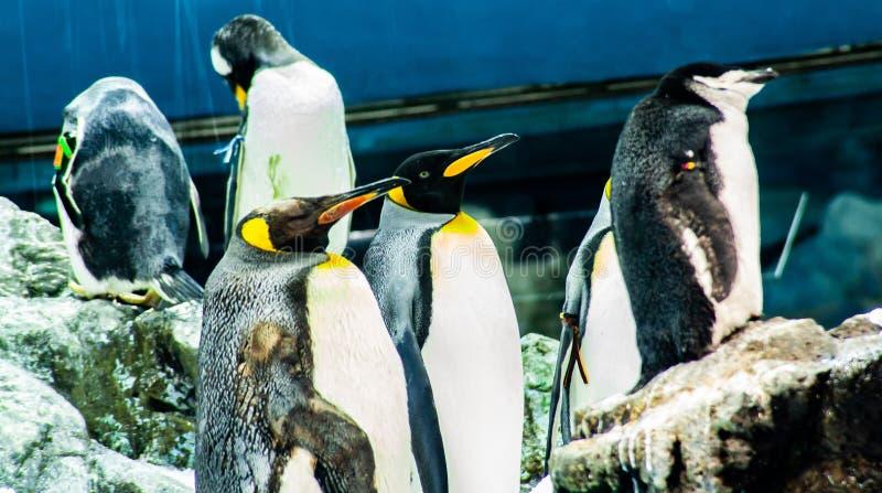 Pingüino el dormir en el parque zoológico en España imagen de archivo