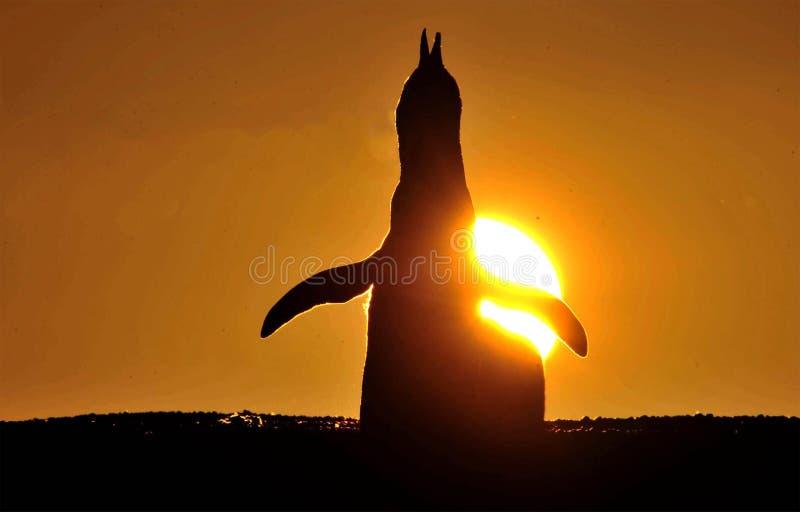 Pingüino patagón fotos de archivo