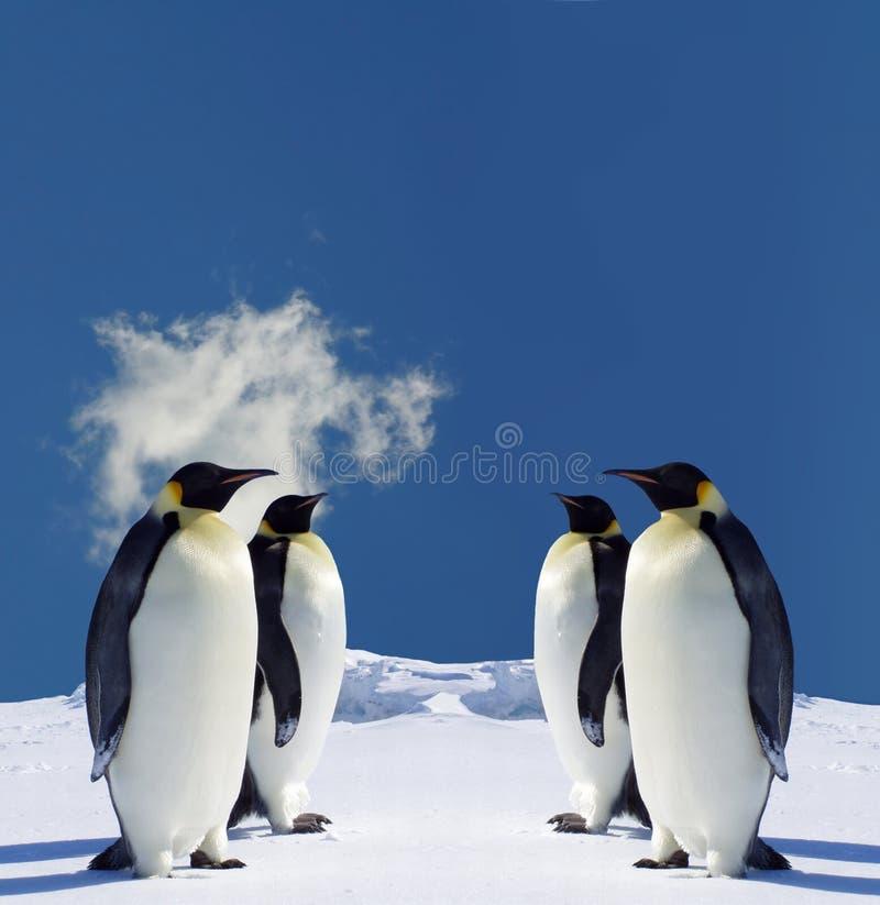 Pingüinos fotografía de archivo libre de regalías