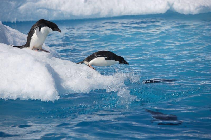 Pingüinos de Adelie en el borde del iceberg en la Antártida fotos de archivo libres de regalías