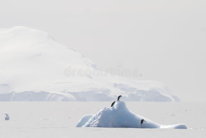 Pingüinos de Chinstrap en un iceberg en Ant3artida imagenes de archivo