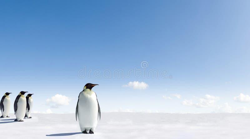 Pingüinos de emperador en Ant3artida fotos de archivo libres de regalías