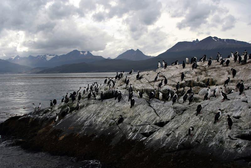 Pingüinos de Malvinas fotografía de archivo libre de regalías