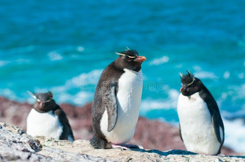 Pingüinos de Rockhopper imágenes de archivo libres de regalías