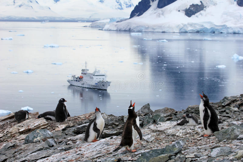 Pingüinos delante de un barco de cruceros antártico, península antártica de Gentoo imagen de archivo